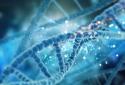 Identificando os genes