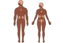 O Sistema Endócrino