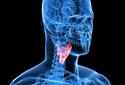 Entenda a laringe