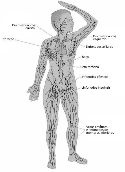 Linfonodos e câncer