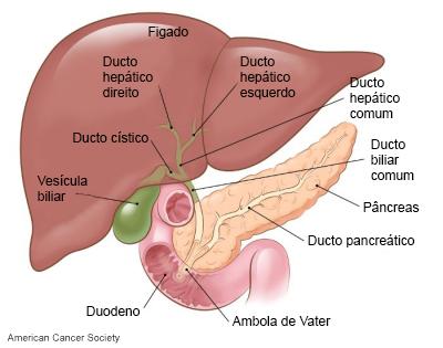 que es cancer hepatobiliar)
