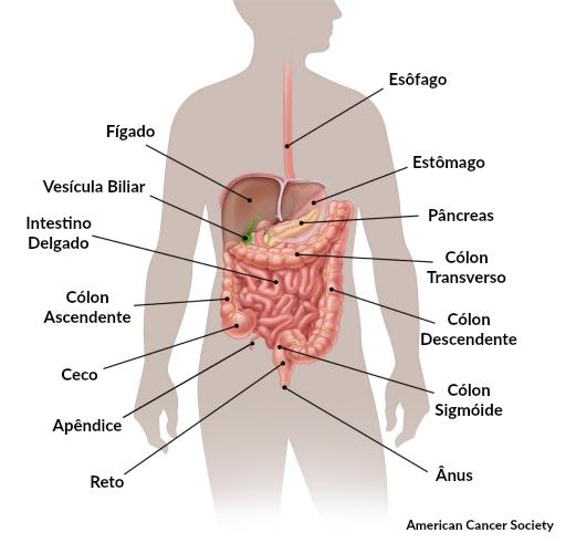 Cancer colon quoi manger - Cancer colon regime alimentaire