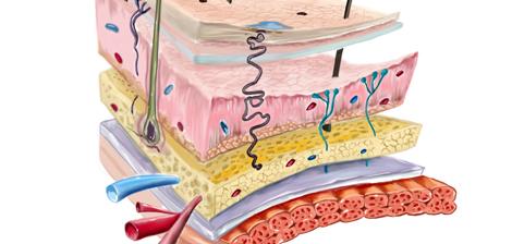 O que são as partes moles? Conheça seu corpo.