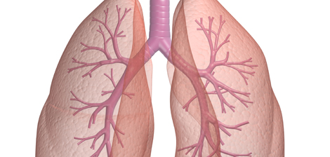 Saiba como é formado o seu pulmão