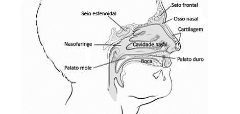 A cavidade nasal: conheça seu corpo