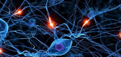 O sistema nervoso: conheça seu corpo